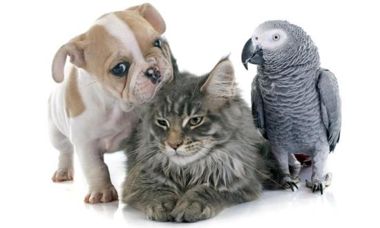 ЗООГЕН Україна - Перший центр ветеринарної генетики
