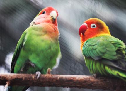 Визначення статі птахів
